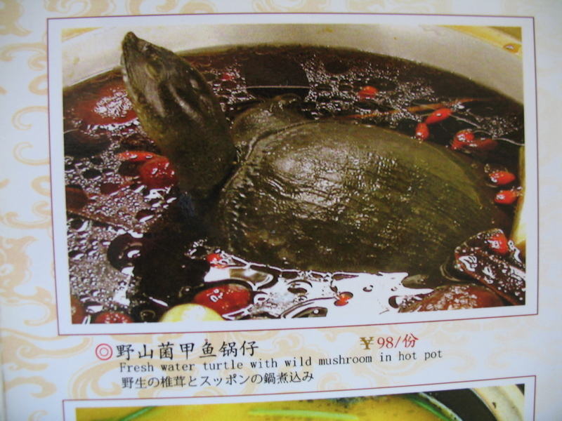 Tortue pas ninja for Ala shanghai chinese cuisine